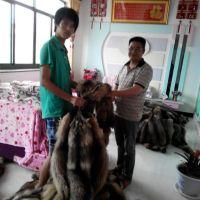 昌黎县尚金貉狐皮毛养殖场