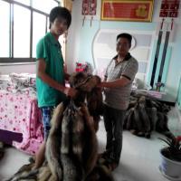 昌黎皮草,貉子皮狐狸皮供应商