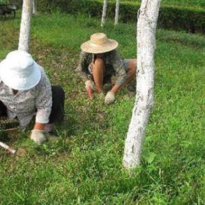 南京綠化養護