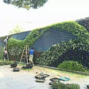东营新款垂直立体绿化