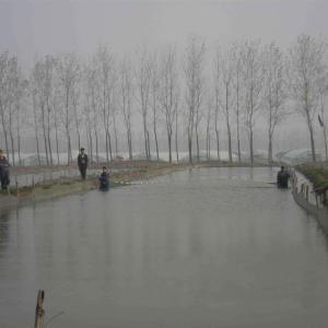 河源泥鰍養殖基地 宏福