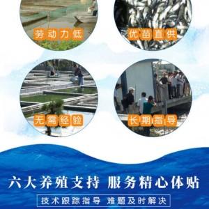 宣城黃辣丁收購廠家 魚塘拉魚 價格穩定