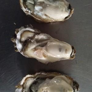 乳山牡蠣養殖 牡蠣批發
