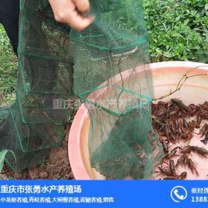 小龍蝦養殖加盟-大渡口區小龍蝦養殖-張勇水產種苗培育
